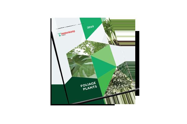 Groene planten & grassen