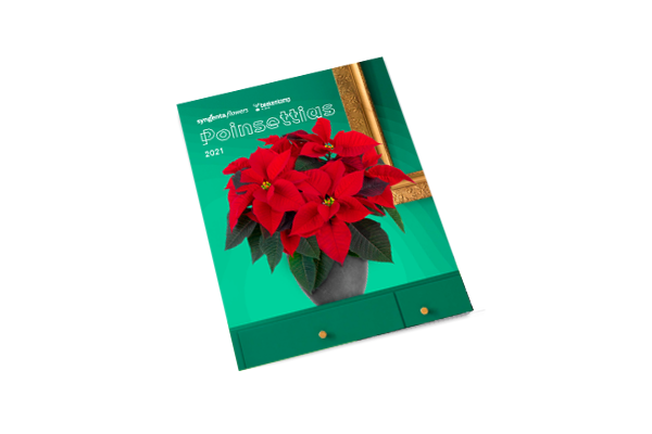 Poinsettia North America