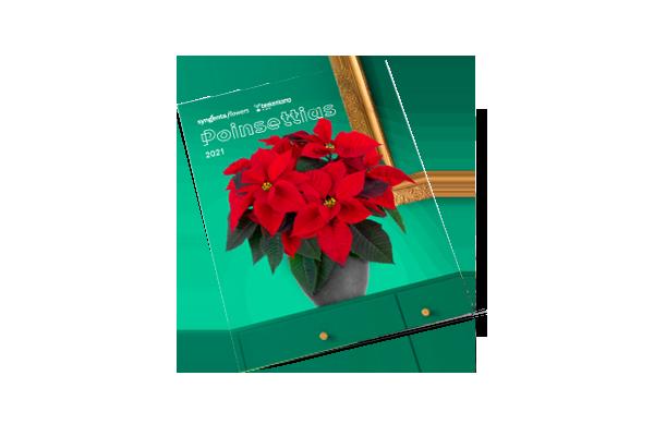 Poinsettia North America