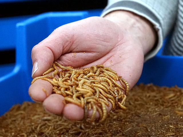 Meelwormen kweekbak